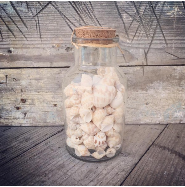 Fľaša plná mušlí Shells